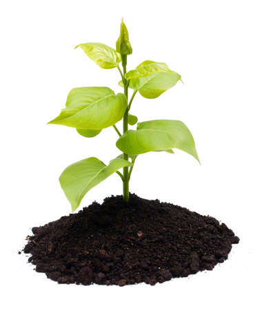 Plant and soil, isolated on white background Stock Photo - 6894866
