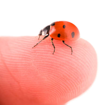 Macro of a ladybug sitting on finger, isolated on white background photo
