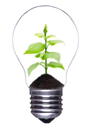 sustentabilidad: Bombilla de luz con una planta de creciente dentro de aislados sobre fondo blanco