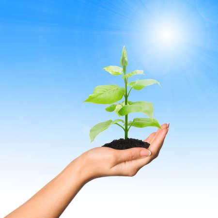 desarrollo sustentable: Mano con una planta sobre fondo de cielo azul con sol Foto de archivo