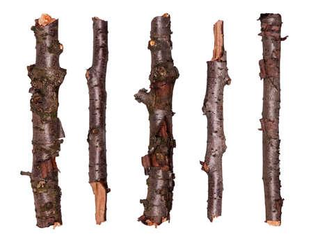 Colección de ramas de árboles secos - aislados en fondo blanco
