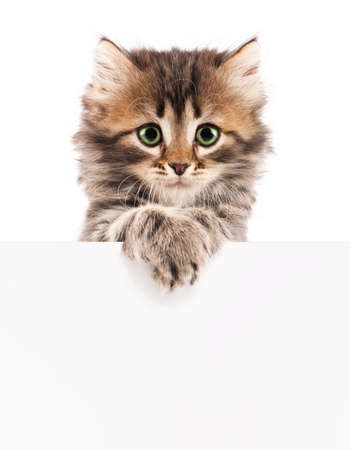 Kitten with blank Stock Photo