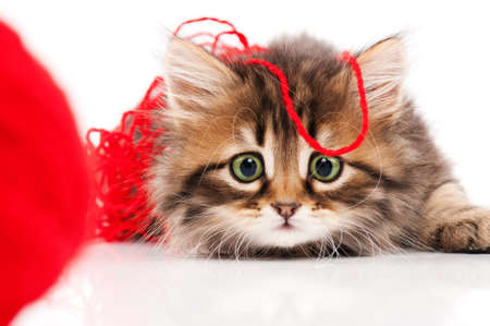 furry animals: Lindo gatito Foto de archivo