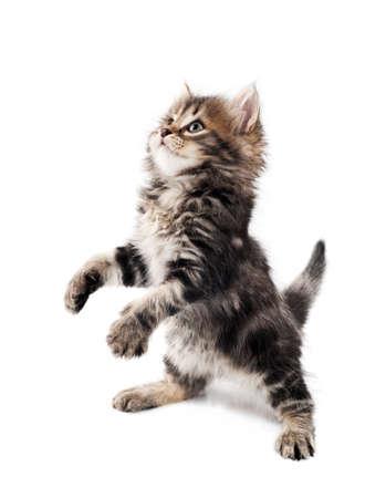 kotek: Cute kitten Zdjęcie Seryjne