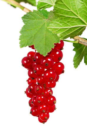 Ripe currant photo