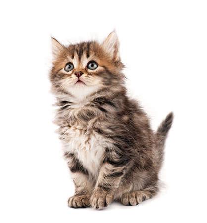 buena postura: Lindo gatito Foto de archivo