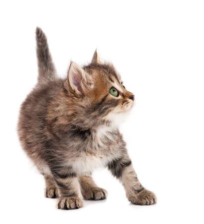 kitties: Cute kitten Stock Photo