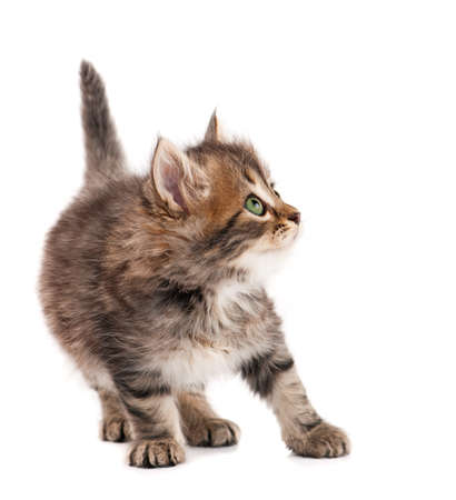 interested baby: Cute kitten Stock Photo