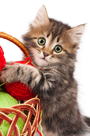 Cute little Siberian kitten with red clew isolated on white background photo