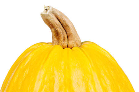 Single fresh nice pumpkin on white background photo