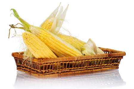 Fresh an ear of corn with green leaves on a white background photo