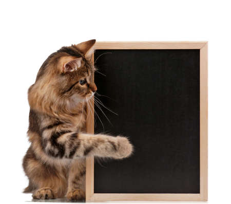 cat paw: Pretty young cat with a blackboard over white background
