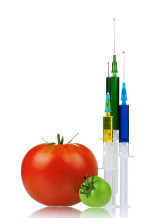 genetically modified organism: Genetically modified organism - ripe tomato with syringes on white background