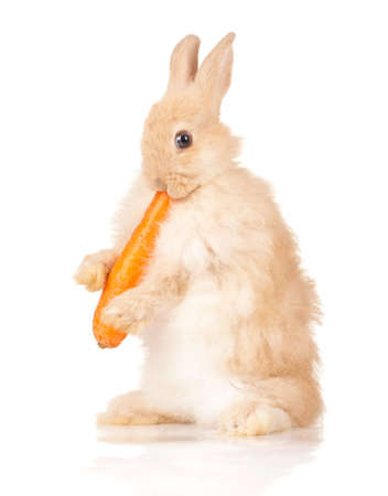 Portrait of adorable rabbit with carrot over white background photo