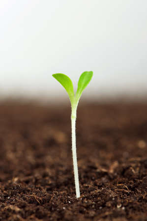 plant seed: Close-up of green seedling growing out of soil