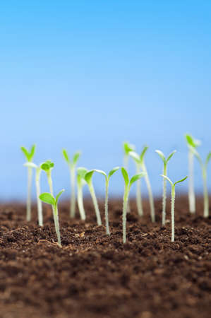 Close-up of green seedling growing out of soil photo