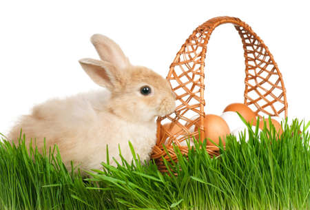 Adorable rabbit and basket with eggs in green grass on white background Stock Photo - 12012530