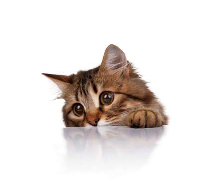 Cute young Siberian cat on white background photo