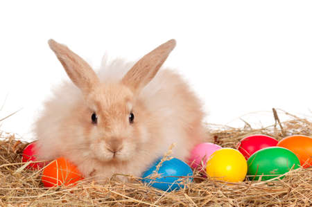 Adorable rabbit and Easter eggs on white background photo