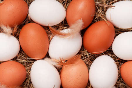 Fresh chicken eggs in the natural nest of hay photo