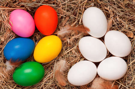 Fresh chicken eggs and Easter eggs in the natural nest of hay photo