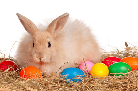Adorable rabbit and Easter eggs on white background Stock Photo - 12325937