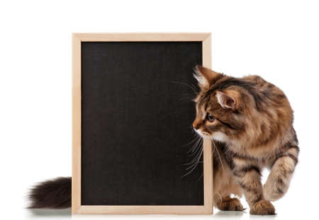 Pretty young cat with a blackboard over white background photo