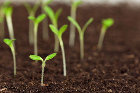 thrive: Close-up of green seedling growing out of soil