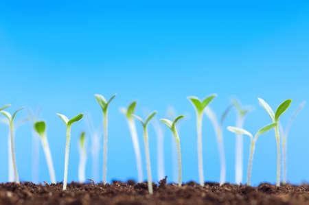 Close-up van groene zaailingen groeien van de bodem