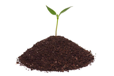 Close-up of green seedling growing out of soil isolated on white background Stock Photo - 12562383
