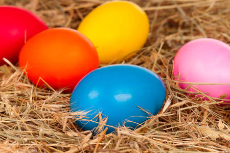 incubation: Easter eggs in the natural nest of hay Stock Photo