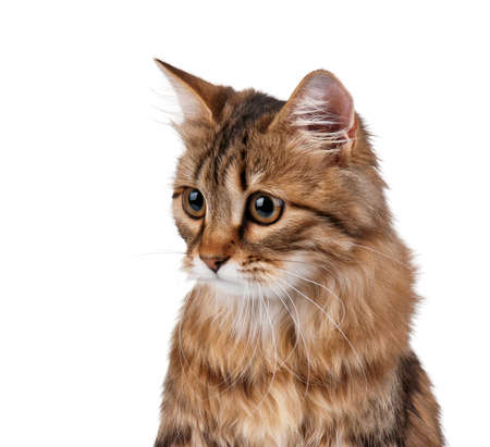 Portrait of pretty young cat over white background photo