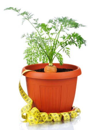 Fresh young carrot in plastic pot over a white background photo
