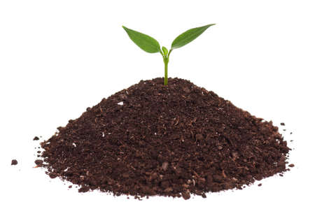 Close-up of green seedling growing out of soil isolated on white background Stock Photo - 12695258