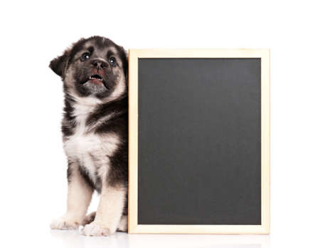 Cute puppy of 1,5 months old with a blackboard over white background photo