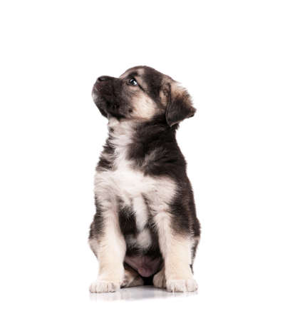 Cute puppy of 1,5 months old on a white background photo