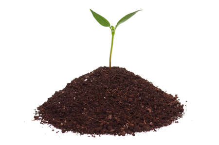 Close-up of green seedling growing out of soil isolated on white background photo