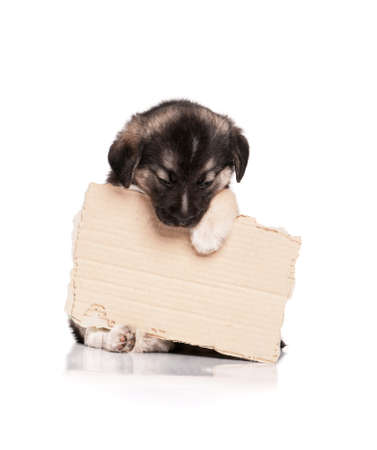 Cute puppy of 1,5 months old with a cardboard on a white background photo