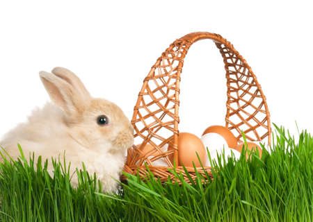 Adorable rabbit and basket with eggs in green grass on white background photo