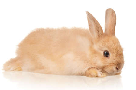 Portrait of adorable rabbit over white background photo