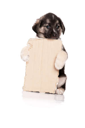 Cute puppy of 1,5 months old with a cardboard on a white background Stock Photo - 13143913