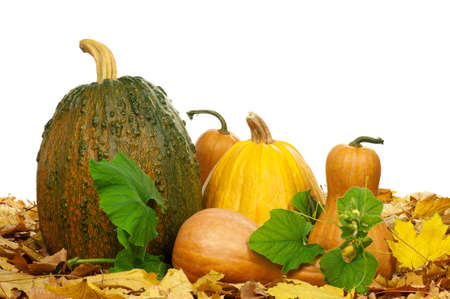 Large pumpkin surrounded by leaves and small pumpkins on a white background Stock Photo - 13145716