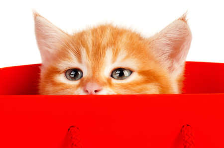 Cute little red kitten in a shopping bag isolated on white background photo