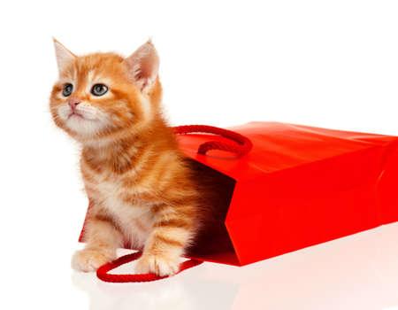 gato naranja: Lindo gatito poco de rojo en una bolsa de compras aisladas sobre fondo blanco