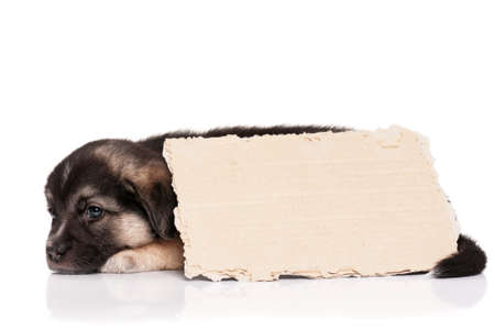 Cute puppy of 1,5 months old with a cardboard on a white background Stock Photo - 14765439