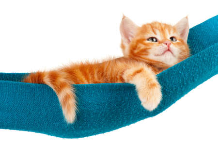 Cute little red kitten in a hammock  isolated on white background photo