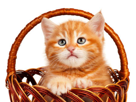 Cute little red kitten in a wicker basket isolated on white background photo
