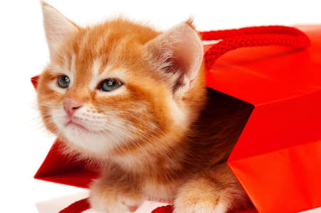 Cute little red kitten in a shopping bag isolated on white background Stock Photo