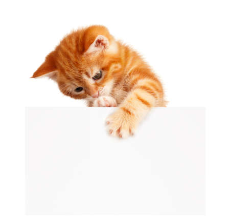 Cute little red kitten with empty board isolated on white background photo