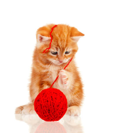 Cute little red kitten isolated with red clew on white background photo